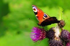 Papillon et fleur Images stock