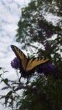 Papillon et fleur Photos libres de droits