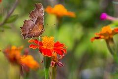 Papillon et fleur Photographie stock libre de droits