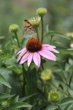 Papillon et fleur - signes de ressort Photos stock