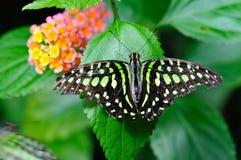 Papillon et fleurs Images libres de droits