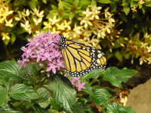 Papillon et fleurs Images stock