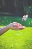 Papillon et mains Image stock