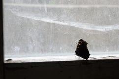 Papillon fermé photographie stock