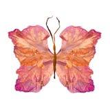 Papillon floral fait à partir de la fleur de glaïeul Images libres de droits
