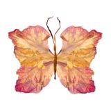 Papillon floral fait à partir de la fleur de glaïeul Images stock