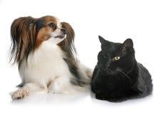 Papillon hund och katt Royaltyfria Foton