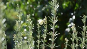 Papillon jaune élégant sur la branche images libres de droits