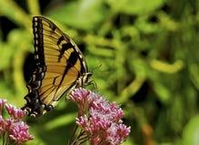 Papillon jaune été perché Images libres de droits