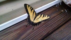 papillon jaune Photographie stock libre de droits
