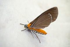 papillon jaune Images libres de droits