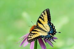 Papillon jaune sur la fleur avec l'espace ouvert vert Image libre de droits