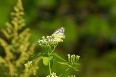 Papillon jaune sur une petite fleur en nature image stock