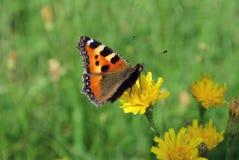 Papillon lumineux de jour Images libres de droits