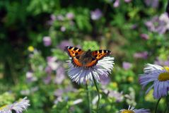 Papillon lumineux se reposant sur des fleurs Image stock