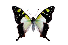 Papillon - machaon de Macleays Photo stock