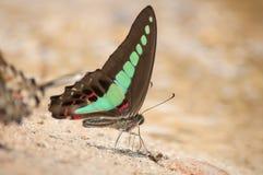 Papillon mignon Photos libres de droits