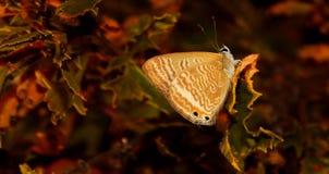 Papillon modelé sur la feuille Photo stock