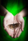 Papillon mort dans la main de dame, concept de la terre verte Image stock