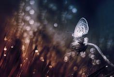 Papillon, nature d'insecte, naturelle, art Photographie stock