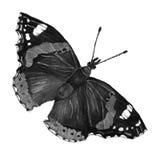 Papillon noir et blanc Image libre de droits