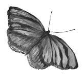 Papillon noir et blanc Photos stock