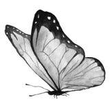 Papillon noir et blanc Image stock