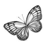 Papillon noir et blanc Photo libre de droits