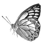 Papillon noir et blanc Photos libres de droits