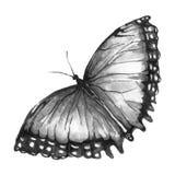Papillon noir et blanc Images stock