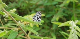 Papillon noir et blanc dans le baground vert photographie stock libre de droits