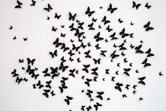 Papillon noir sur un fond blanc Images libres de droits