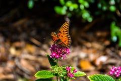 Papillon orange Photo libre de droits