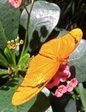 Papillon orange Photos libres de droits