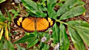 Papillon orange Photographie stock