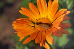 Papillon orange lumineux Images stock