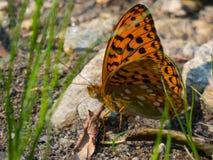 Papillon orange se reposant au soleil Image libre de droits