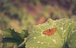 Papillon orange se reposant sur la feuille de potiron photos stock