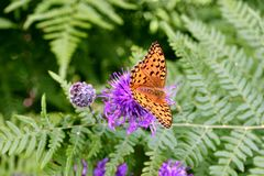 Papillon orange sur la fleur Images stock