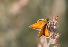 Papillon orange sur une lame Photographie stock libre de droits