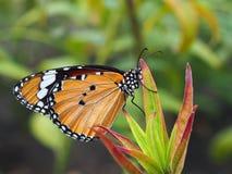 Papillon orange sur une usine Image libre de droits