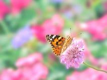 Papillon peint de dame photos stock