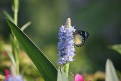 Papillon pendant le matin photographie stock libre de droits