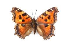 Papillon - petite écaille (urticae d'Aglais) d'isolement sur le whi Photos stock