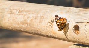 Papillon posé sur un identifiez-vous la forêt Image stock