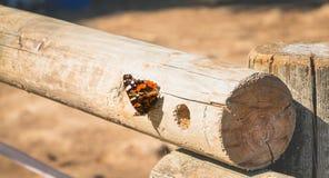 Papillon posé sur un identifiez-vous la forêt Image libre de droits