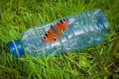 Papillon posant dans les déchets d'un parc Photo stock