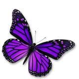 Papillon pourpre image stock