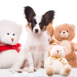 Papillon puppy with its favourite toys Stock Photography