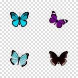 Papillon réaliste, Spicebush, animal de ciel et d'autres éléments de vecteur L'ensemble de symboles réalistes de papillon inclut  Image stock